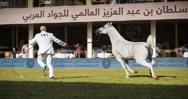 رفع جائزة الأمير سلطان للجواد العربي إلى 1.5 مليون دولار