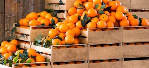 صادرات دمشق الزراعية تقارب 130 مليون دولار منذ مطلع العام